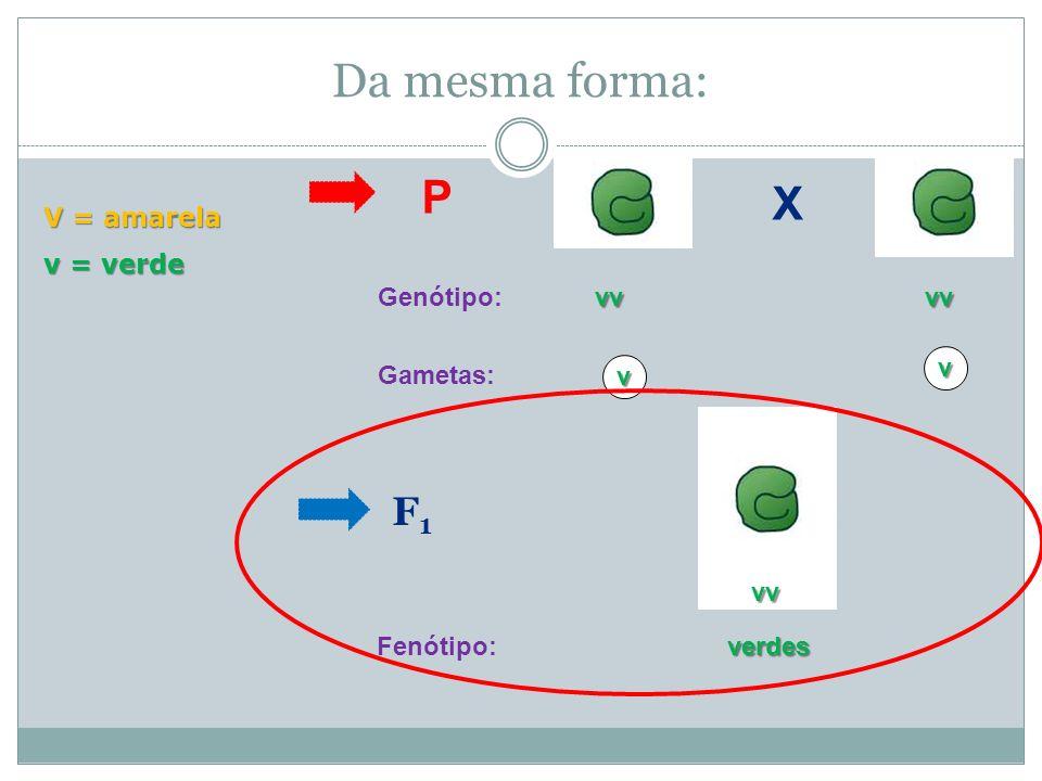 Cruzando as duas puras: P F1F1 VV vv Genótipo: Gametas:Vv VvVvVvVv Genótipo: amarelas Fenótipo: amarelas V = amarela v = verde