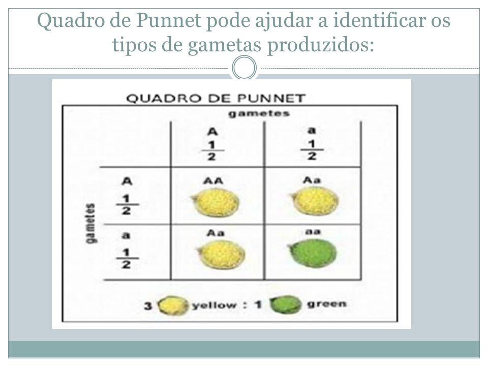 Quadro de Punnet pode ajudar a identificar os tipos de gametas produzidos: