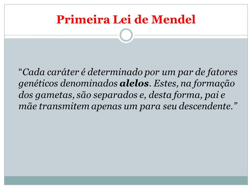 Primeira Lei de Mendel Cada caráter é determinado por um par de fatores genéticos denominados alelos. Estes, na formação dos gametas, são separados e,
