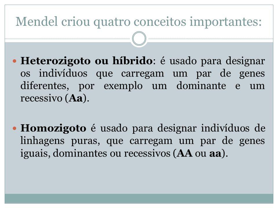 Mendel criou quatro conceitos importantes: Heterozigoto ou híbrido: é usado para designar os indivíduos que carregam um par de genes diferentes, por e