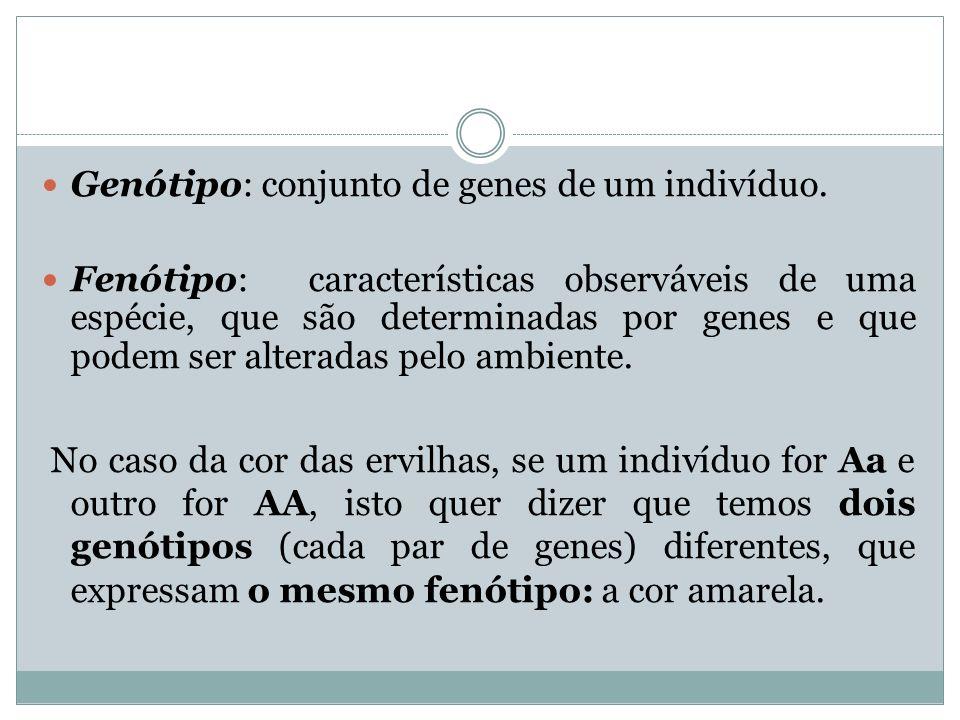 Genótipo: conjunto de genes de um indivíduo. Fenótipo: características observáveis de uma espécie, que são determinadas por genes e que podem ser alte