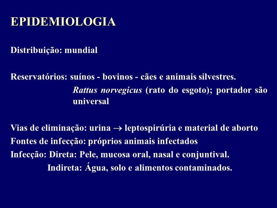 EPIDEMIOLOGIA Distribuição: mundial Reservatórios: suínos - bovinos - cães e animais silvestres. Rattus norvegicus (rato do esgoto); portador são univ