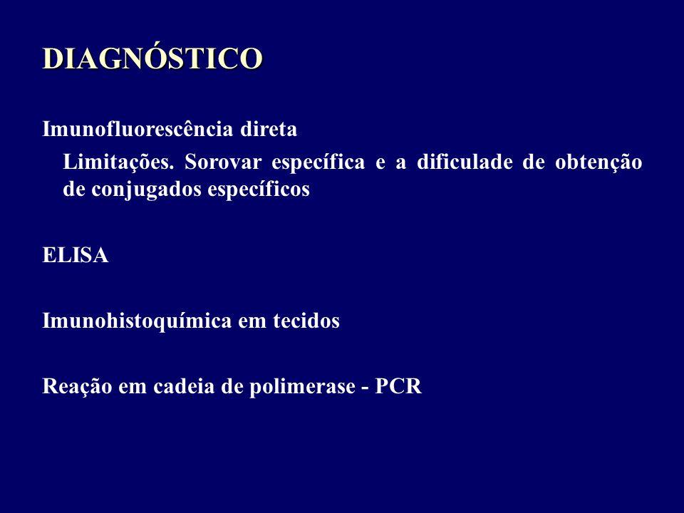 DIAGNÓSTICO Imunofluorescência direta Limitações. Sorovar específica e a dificulade de obtenção de conjugados específicos ELISA Imunohistoquímica em t