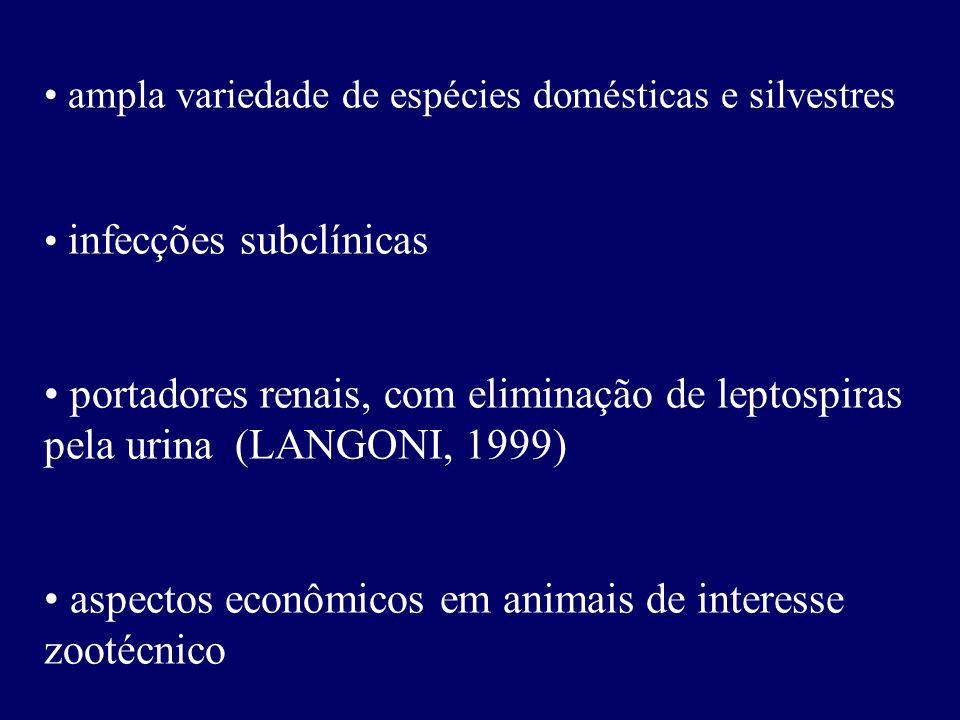 ampla variedade de espécies domésticas e silvestres infecções subclínicas portadores renais, com eliminação de leptospiras pela urina (LANGONI, 1999)