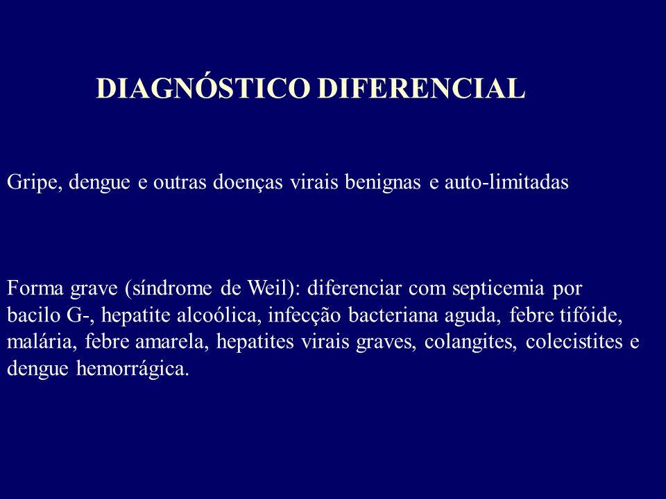 DIAGNÓSTICO DIFERENCIAL Gripe, dengue e outras doenças virais benignas e auto-limitadas Forma grave (síndrome de Weil): diferenciar com septicemia por
