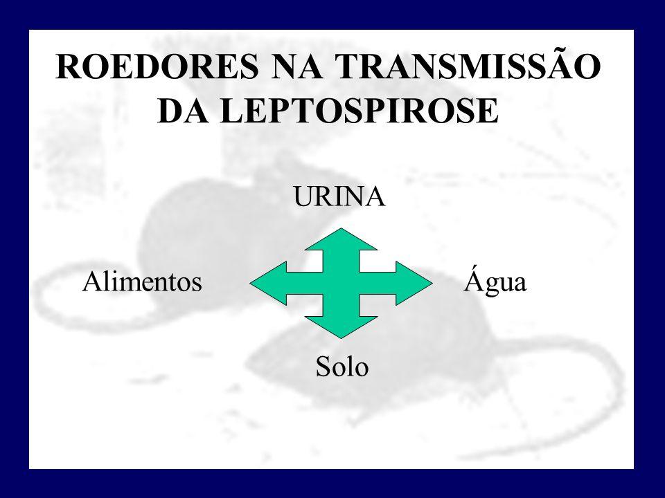 ROEDORES NA TRANSMISSÃO DA LEPTOSPIROSE URINA Alimentos Água Solo