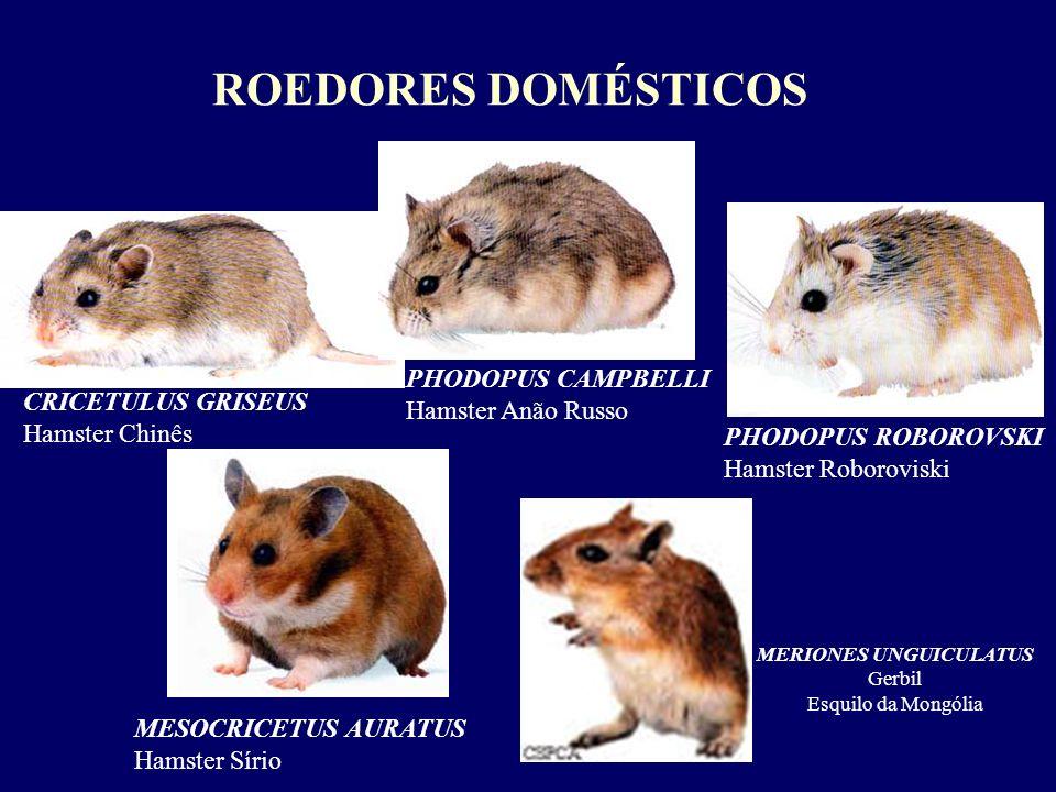 CRICETULUS GRISEUS Hamster Chinês PHODOPUS CAMPBELLI Hamster Anão Russo PHODOPUS ROBOROVSKI Hamster Roboroviski MESOCRICETUS AURATUS Hamster Sírio MER