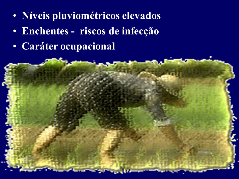 Avaliação pela captura de roedores INDICADORES DE INFESTAÇÃO