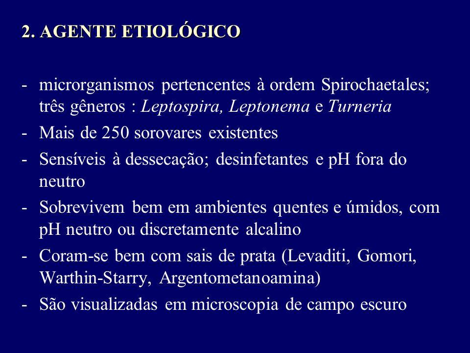 2. AGENTE ETIOLÓGICO -microrganismos pertencentes à ordem Spirochaetales; três gêneros : Leptospira, Leptonema e Turneria -Mais de 250 sorovares exist