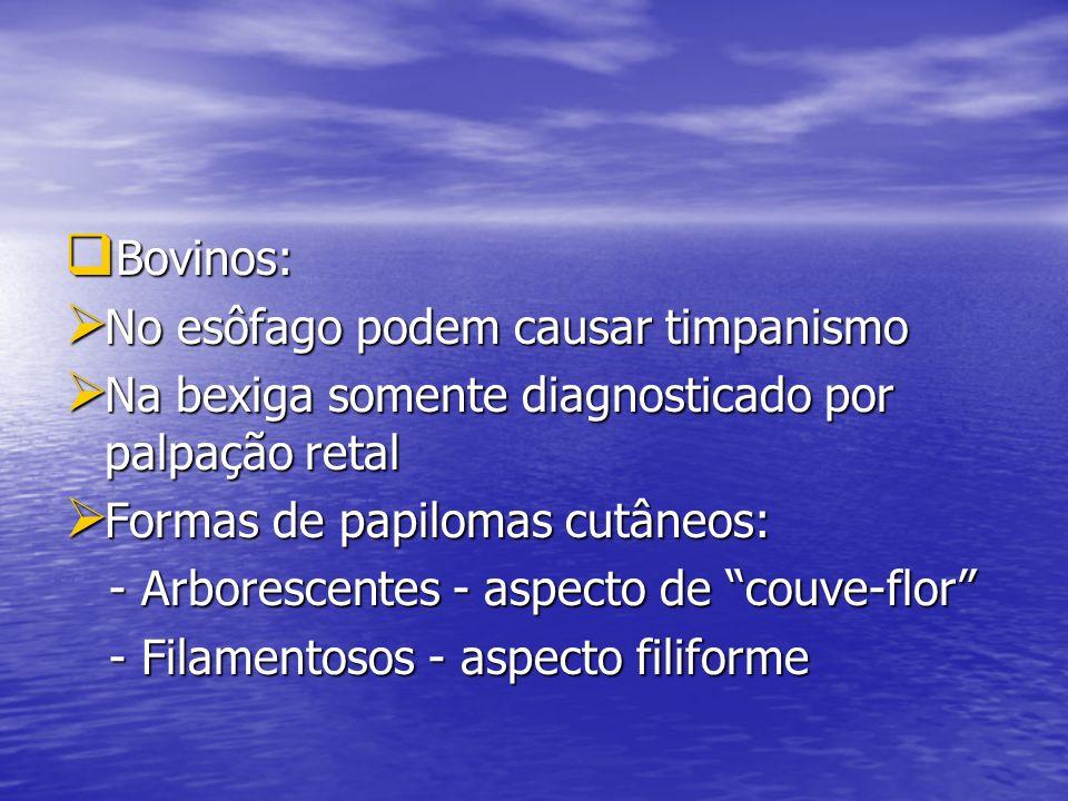 Bovinos: Bovinos: No esôfago podem causar timpanismo No esôfago podem causar timpanismo Na bexiga somente diagnosticado por palpação retal Na bexiga s