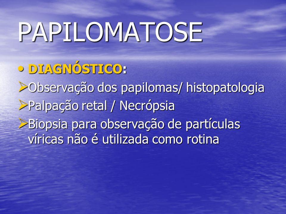 PAPILOMATOSE DIAGNÓSTICO: DIAGNÓSTICO: Observação dos papilomas/ histopatologia Observação dos papilomas/ histopatologia Palpação retal / Necrópsia Pa