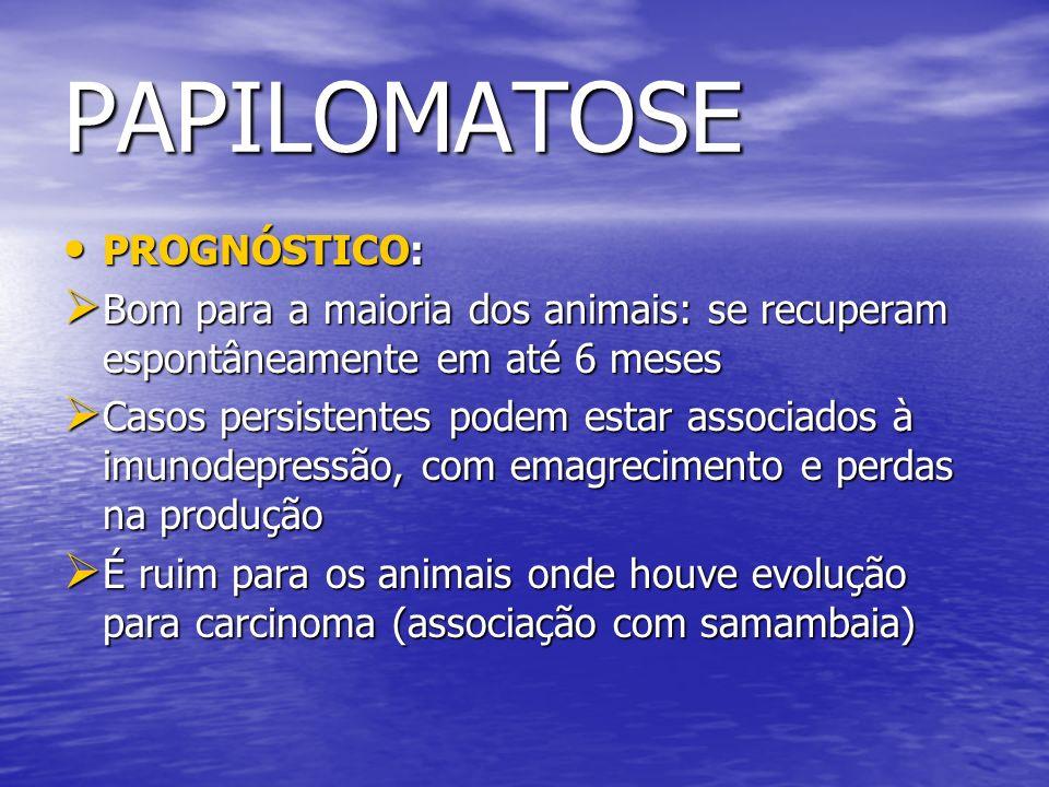 PAPILOMATOSE PROGNÓSTICO: PROGNÓSTICO: Bom para a maioria dos animais: se recuperam espontâneamente em até 6 meses Bom para a maioria dos animais: se