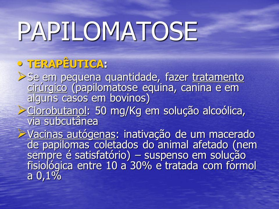 PAPILOMATOSE TERAPÊUTICA: TERAPÊUTICA: Se em pequena quantidade, fazer tratamento cirúrgico (papilomatose equina, canina e em alguns casos em bovinos)