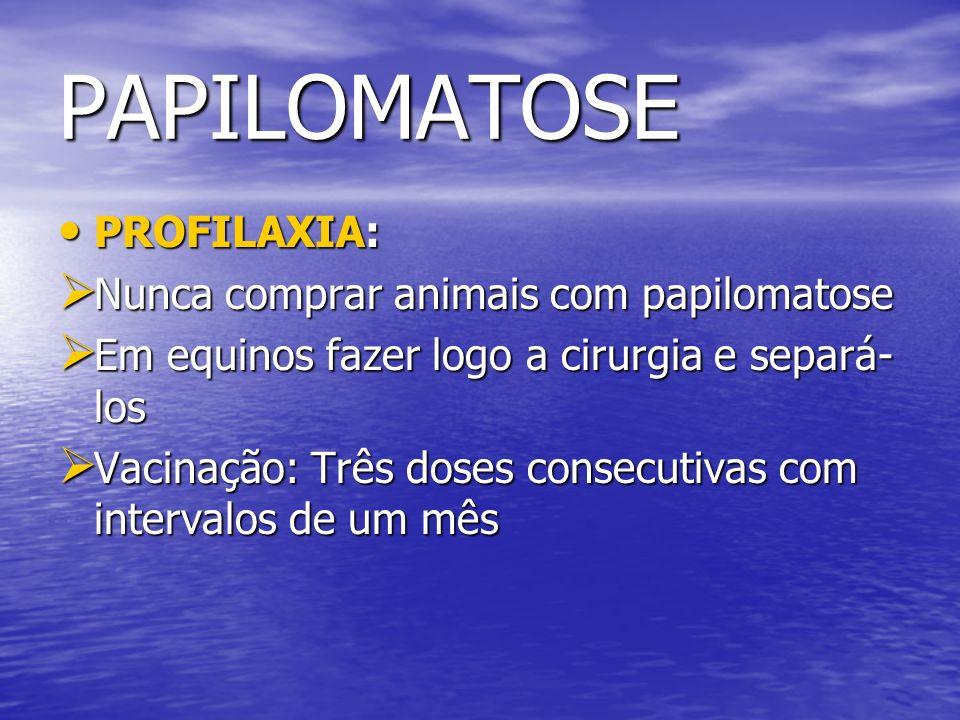 PAPILOMATOSE PROFILAXIA: PROFILAXIA: Nunca comprar animais com papilomatose Nunca comprar animais com papilomatose Em equinos fazer logo a cirurgia e