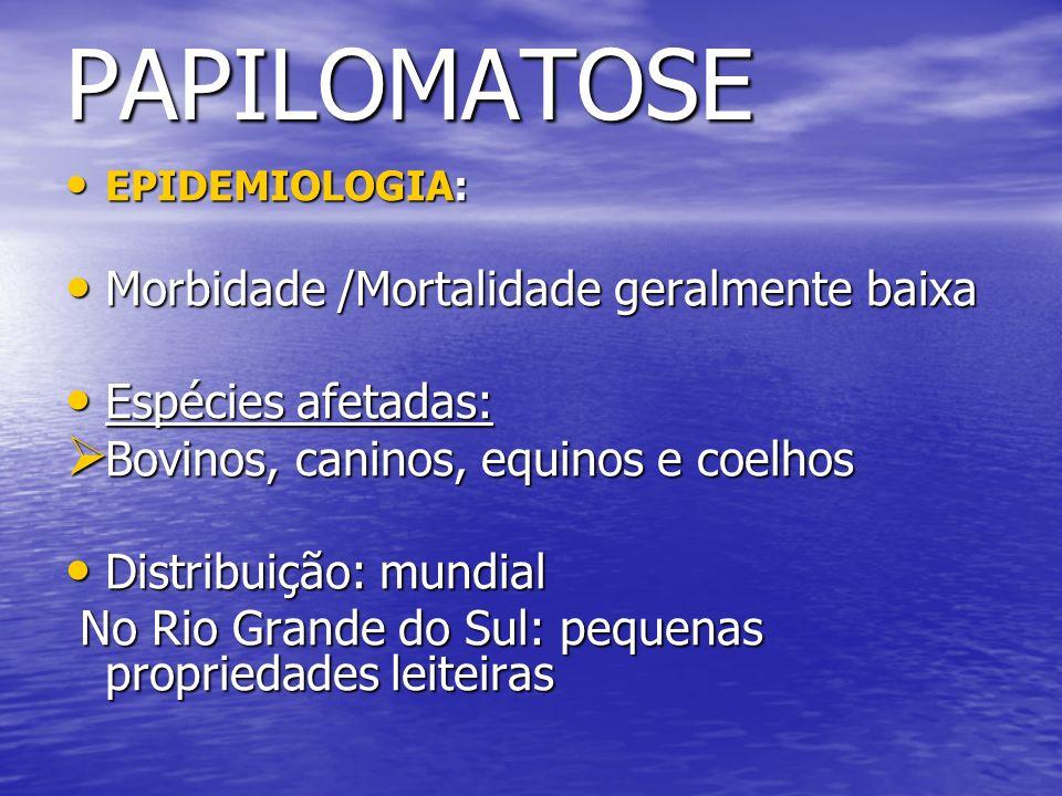 PAPILOMATOSE EPIDEMIOLOGIA: EPIDEMIOLOGIA: Morbidade /Mortalidade geralmente baixa Morbidade /Mortalidade geralmente baixa Espécies afetadas: Espécies