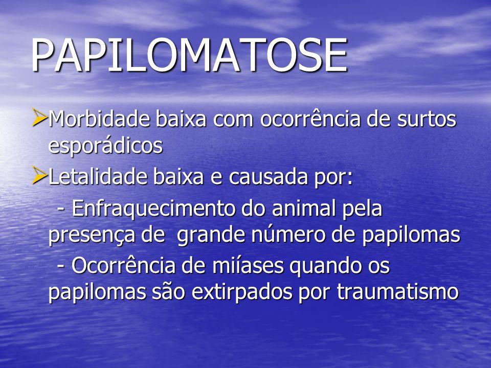 PAPILOMATOSE Morbidade baixa com ocorrência de surtos esporádicos Morbidade baixa com ocorrência de surtos esporádicos Letalidade baixa e causada por: