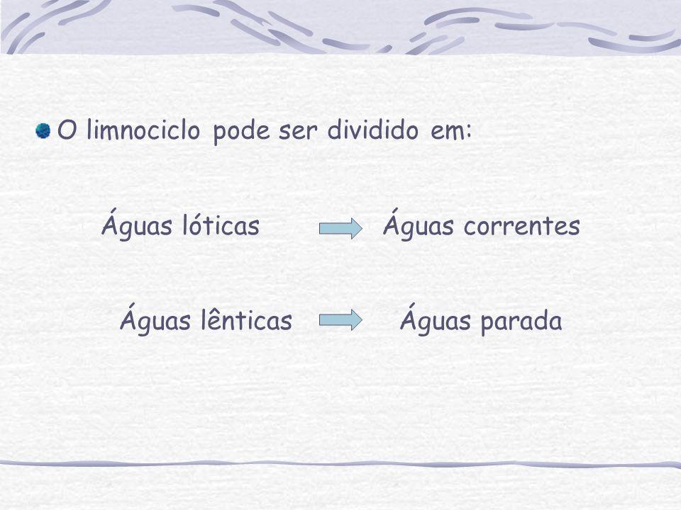 O limnociclo pode ser dividido em: Águas lóticas Águas correntes Águas lênticas Águas parada