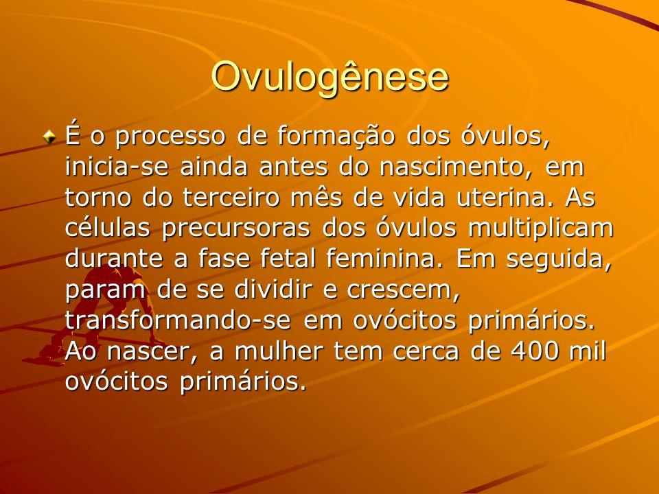Ovulogênese É o processo de formação dos óvulos, inicia-se ainda antes do nascimento, em torno do terceiro mês de vida uterina. As células precursoras