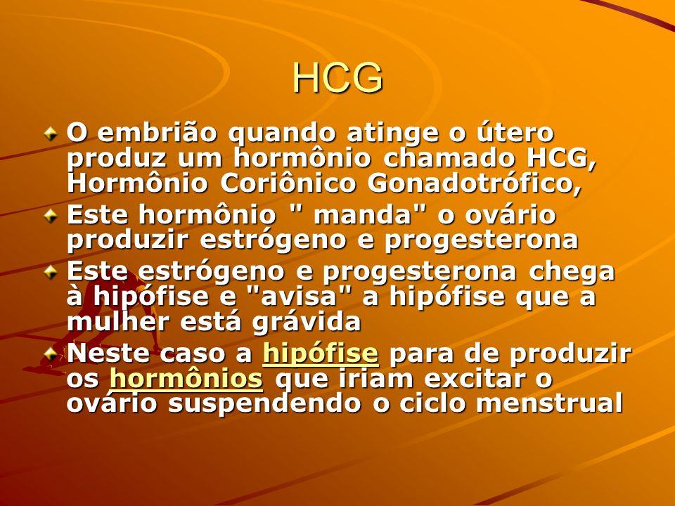HCG O embrião quando atinge o útero produz um hormônio chamado HCG, Hormônio Coriônico Gonadotrófico, Este hormônio