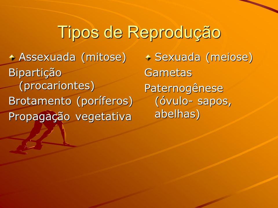 Tipos de Reprodução Assexuada (mitose) Bipartição (procariontes) Brotamento (poríferos) Propagação vegetativa Sexuada (meiose) Gametas Paternogênese (