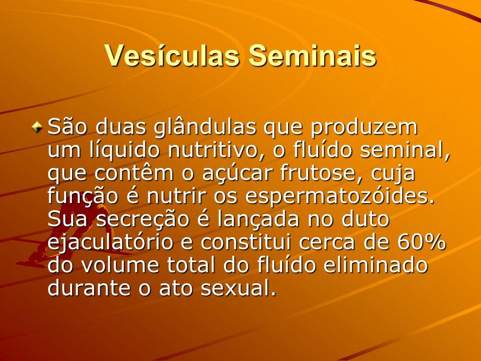 Vesículas Seminais São duas glândulas que produzem um líquido nutritivo, o fluído seminal, que contêm o açúcar frutose, cuja função é nutrir os esperm