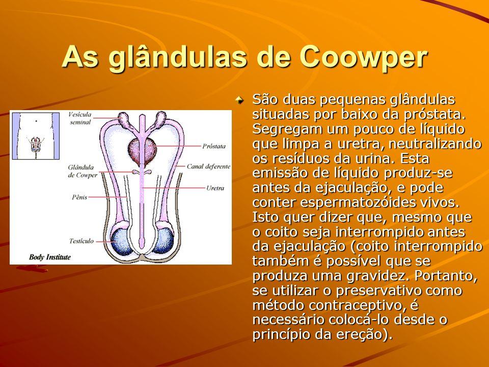 As glândulas de Coowper São duas pequenas glândulas situadas por baixo da próstata. Segregam um pouco de líquido que limpa a uretra, neutralizando os