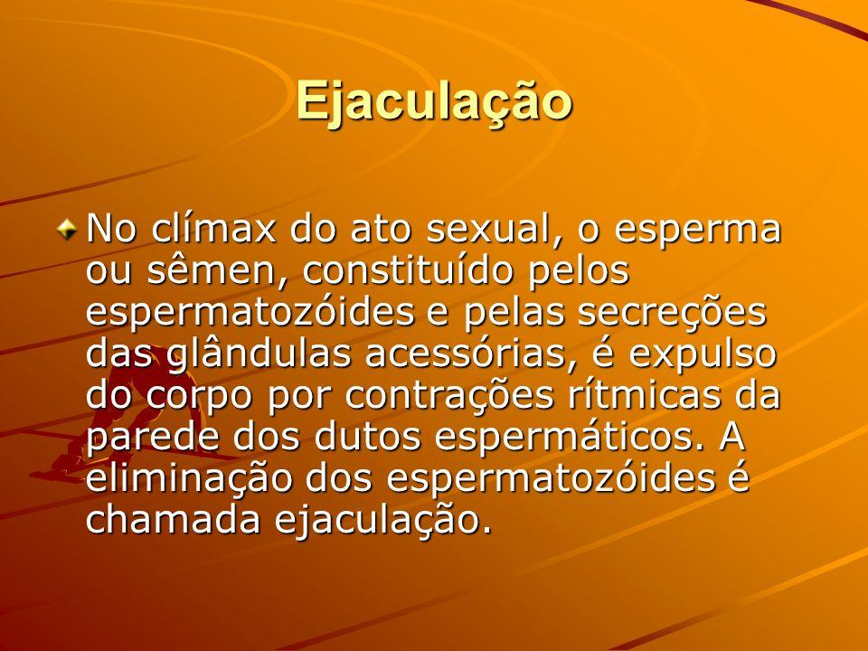 Ejaculação No clímax do ato sexual, o esperma ou sêmen, constituído pelos espermatozóides e pelas secreções das glândulas acessórias, é expulso do cor