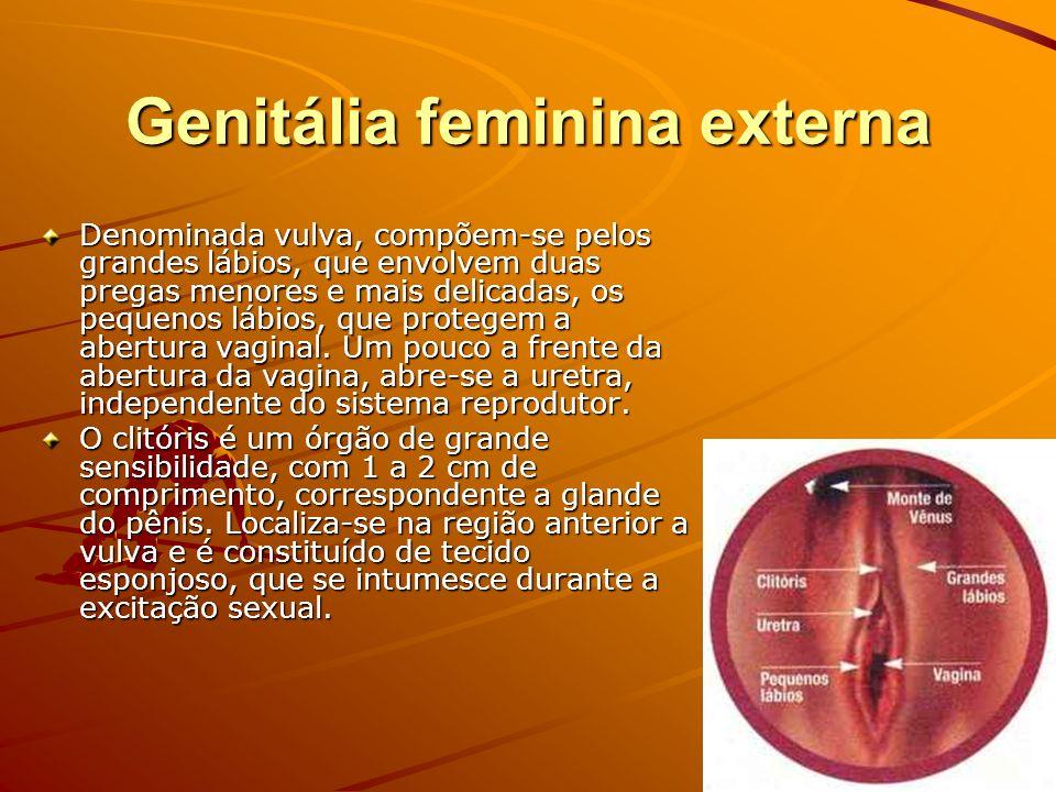 Genitália feminina externa Denominada vulva, compõem-se pelos grandes lábios, que envolvem duas pregas menores e mais delicadas, os pequenos lábios, q