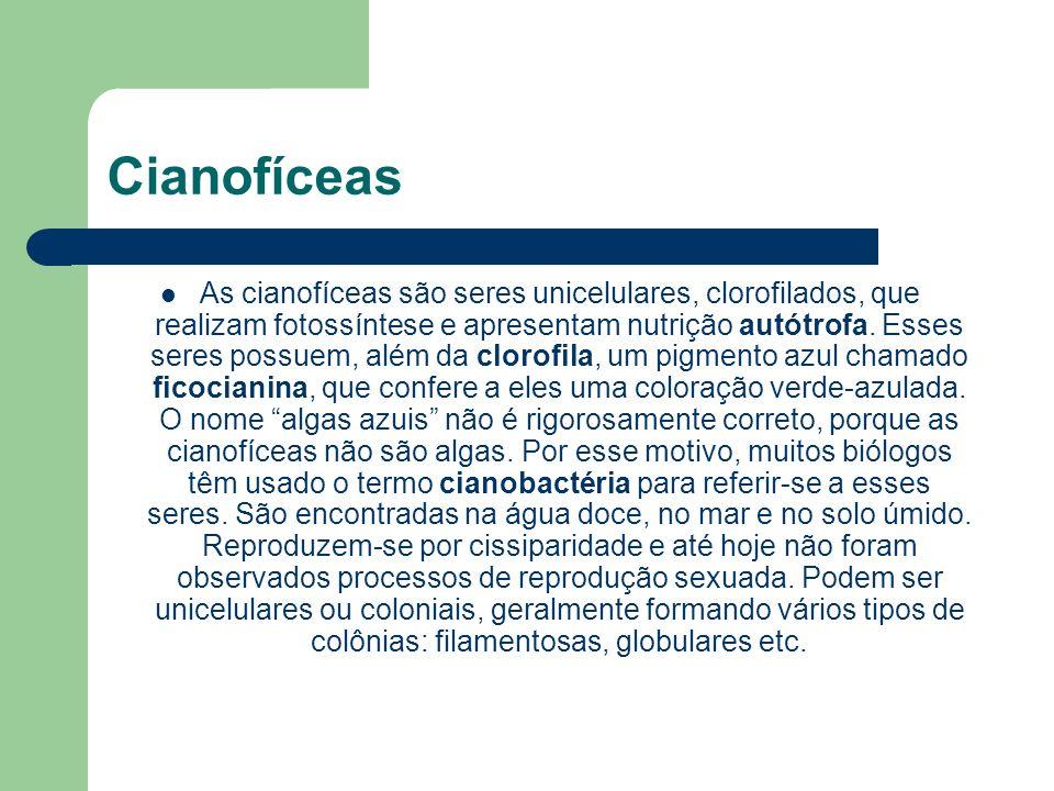 Cianofíceas As cianofíceas são seres unicelulares, clorofilados, que realizam fotossíntese e apresentam nutrição autótrofa. Esses seres possuem, além