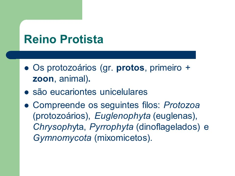 Reino Protista Os protozoários (gr. protos, primeiro + zoon, animal). são eucariontes unicelulares Compreende os seguintes filos: Protozoa (protozoári