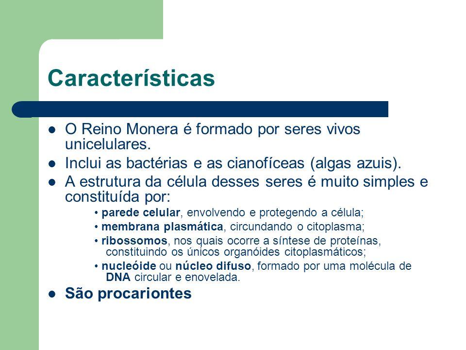 Características O Reino Monera é formado por seres vivos unicelulares. Inclui as bactérias e as cianofíceas (algas azuis). A estrutura da célula desse