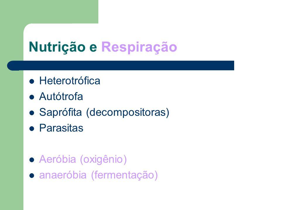 Nutrição e Respiração Heterotrófica Autótrofa Saprófita (decompositoras) Parasitas Aeróbia (oxigênio) anaeróbia (fermentação)