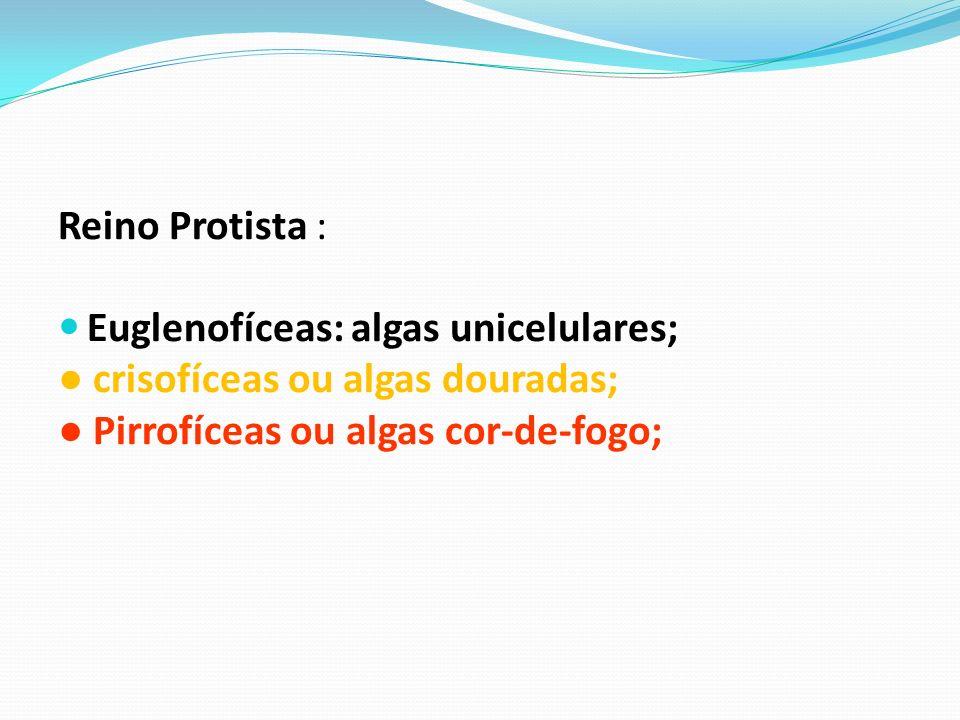 Reino Protista : Euglenofíceas: algas unicelulares; crisofíceas ou algas douradas; Pirrofíceas ou algas cor-de-fogo;