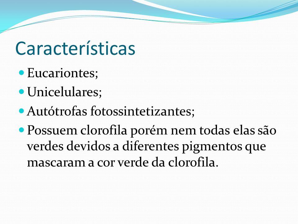 Características Corpo das algas chamado de TALO, não há diferenciação de tecidos ou órgãos.