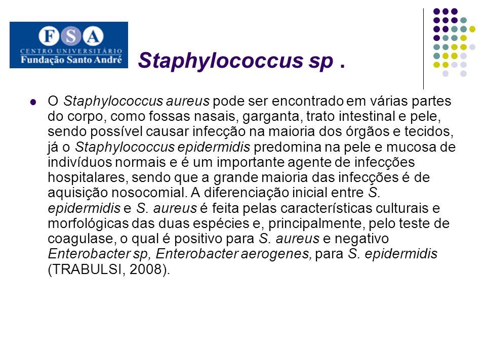 Staphylococcus sp. O Staphylococcus aureus pode ser encontrado em várias partes do corpo, como fossas nasais, garganta, trato intestinal e pele, sendo