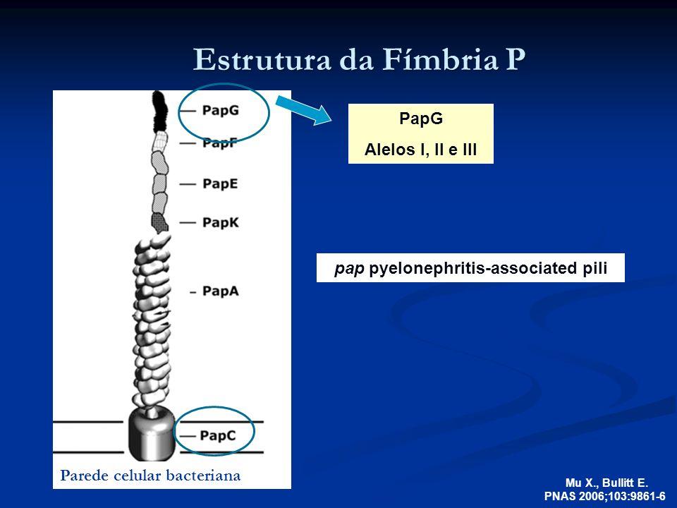 Estrutura da Fímbria P Mu X., Bullitt E. PNAS 2006;103:9861-6 pap pyelonephritis-associated pili PapG Alelos I, II e III Parede celular bacteriana