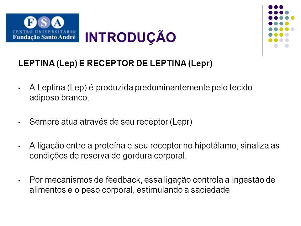 INTRODUÇÃO LEPTINA (Lep) E RECEPTOR DE LEPTINA (Lepr) A Leptina (Lep) é produzida predominantemente pelo tecido adiposo branco. Sempre atua através de