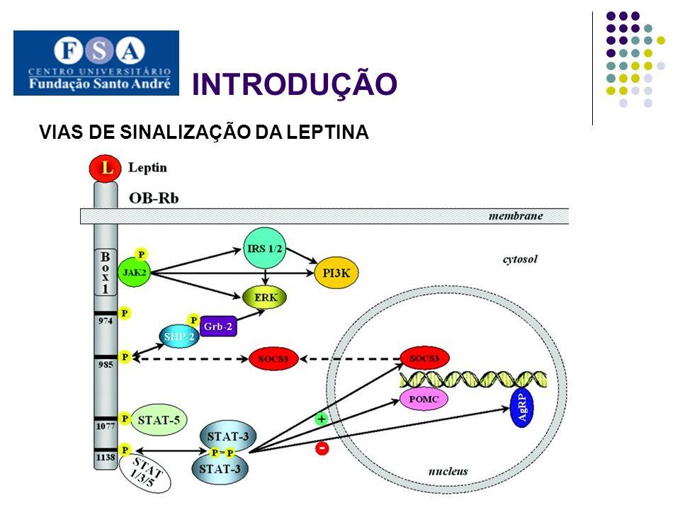 INTRODUÇÃO LEPTINA E TECIDOS NORMAIS E NEOPLÁSICOS Atua no crescimento, ploriferação e migração das células endoteliais.