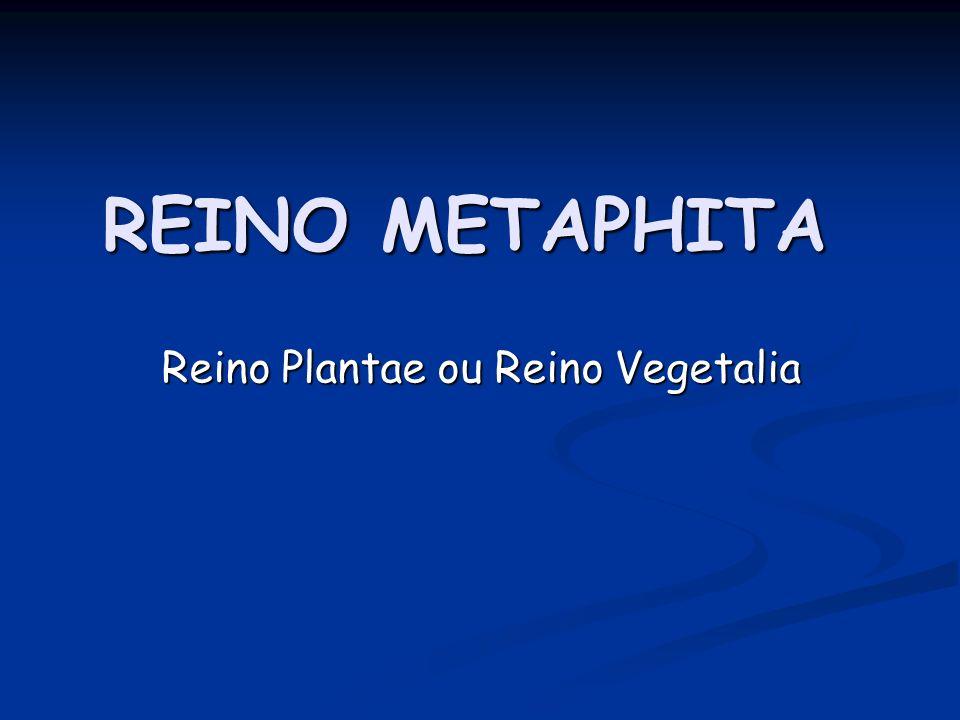 REINO METAPHITA Reino Plantae ou Reino Vegetalia