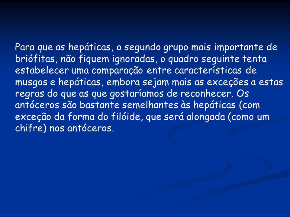 Para que as hepáticas, o segundo grupo mais importante de briófitas, não fiquem ignoradas, o quadro seguinte tenta estabelecer uma comparação entre ca