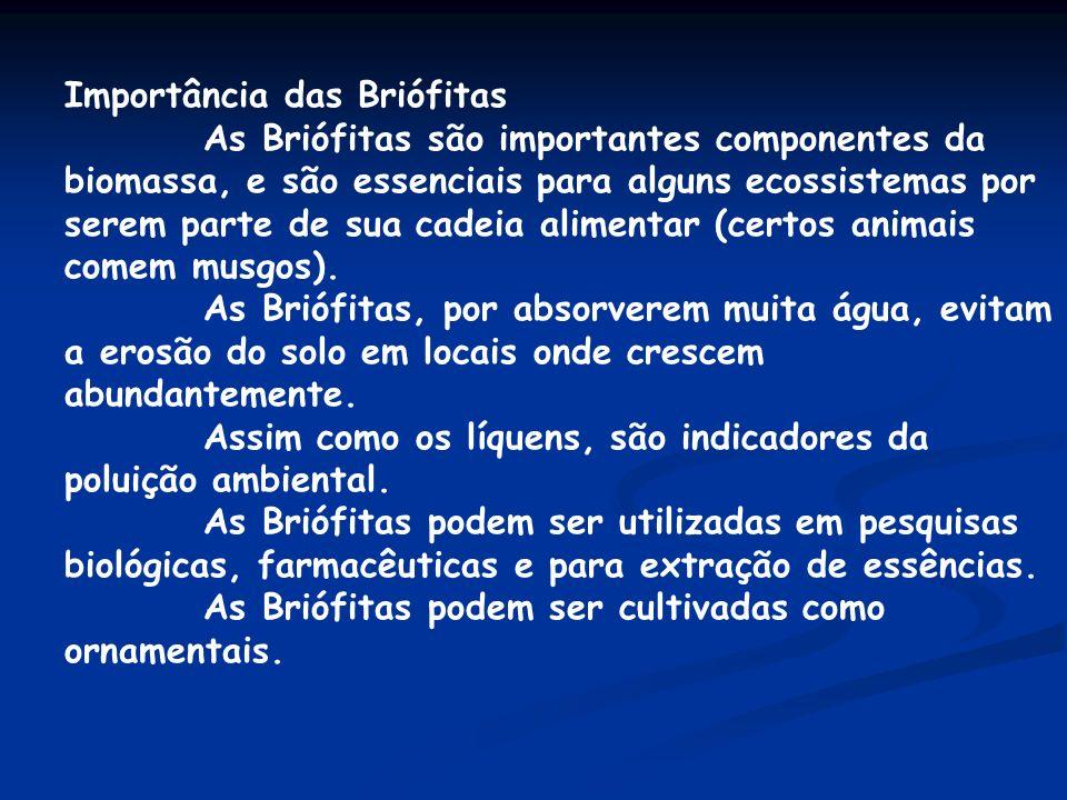 Importância das Briófitas As Briófitas são importantes componentes da biomassa, e são essenciais para alguns ecossistemas por serem parte de sua cadei