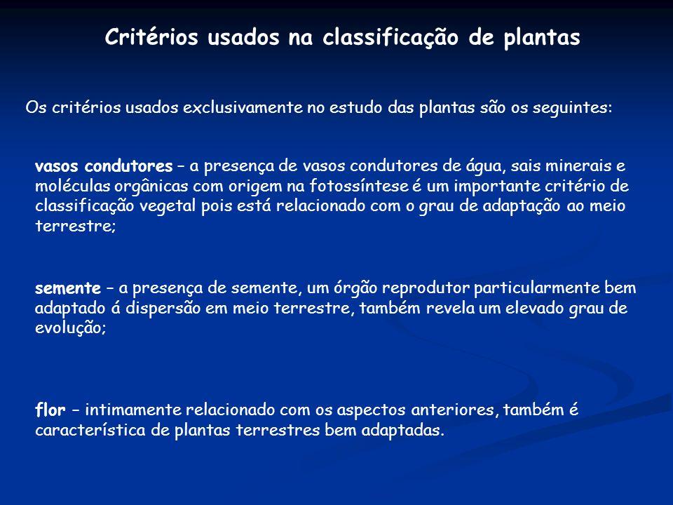 Critérios usados na classificação de plantas Os critérios usados exclusivamente no estudo das plantas são os seguintes: vasos condutores – a presença