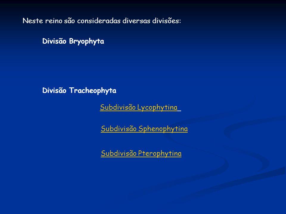Neste reino são consideradas diversas divisões: Divisão Bryophyta Divisão Tracheophyta Subdivisão Lycophytina Subdivisão Sphenophytina Subdivisão Pter