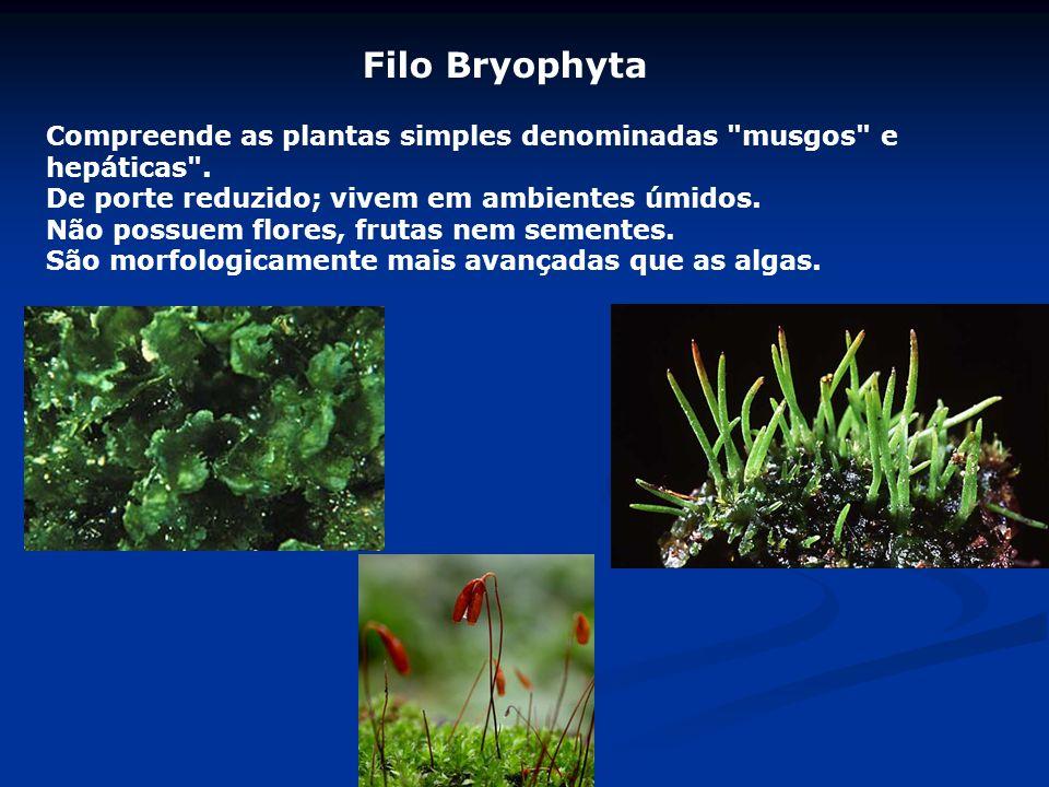 Filo Bryophyta Compreende as plantas simples denominadas