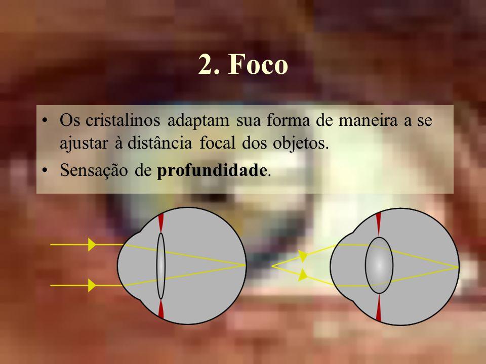 2. Foco Os cristalinos adaptam sua forma de maneira a se ajustar à distância focal dos objetos.