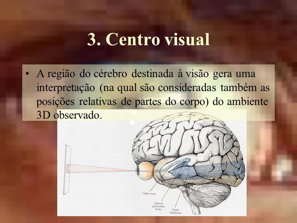 3. Centro visual A região do cérebro destinada à visão gera uma interpretação (na qual são consideradas também as posições relativas de partes do corp