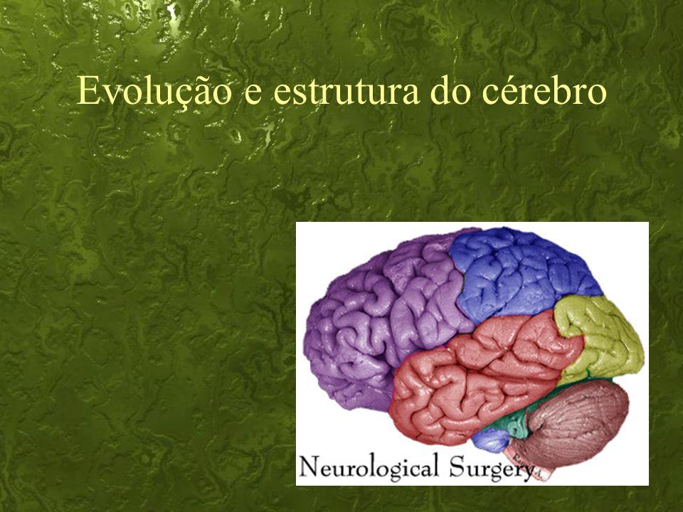 30 Evolução e estrutura do cérebro