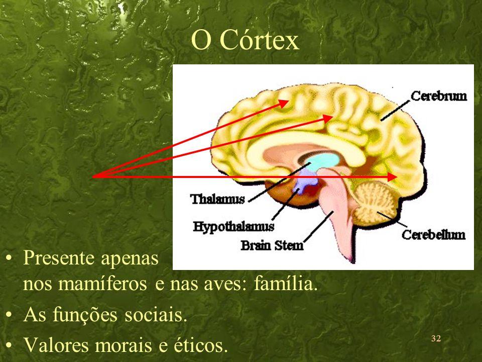 32 O Córtex Presente apenas nos mamíferos e nas aves: família. As funções sociais. Valores morais e éticos.
