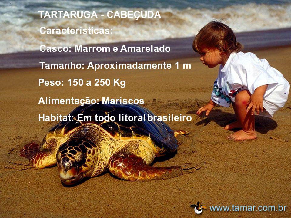 No Brasil são encontradas cinco espécies de tartarugas marinhas: Tartaruga Cabeçuda Tartaruga Oliva Tartaruga Gigante Tartaruga Pente Tartaruga Verde