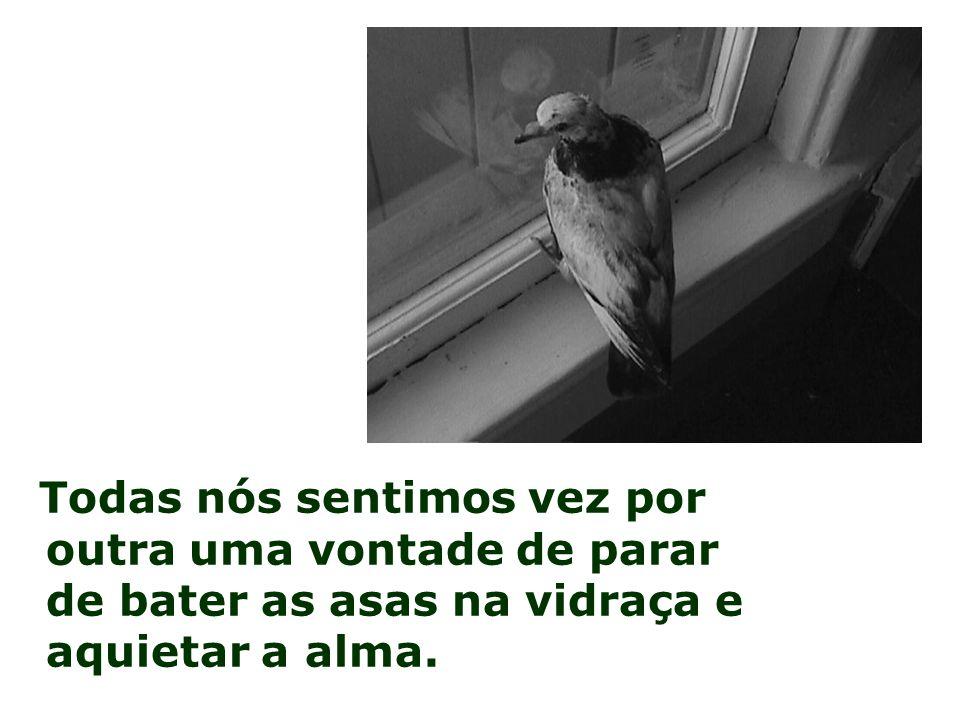 Todas nós sentimos vez por outra uma vontade de parar de bater as asas na vidraça e aquietar a alma.